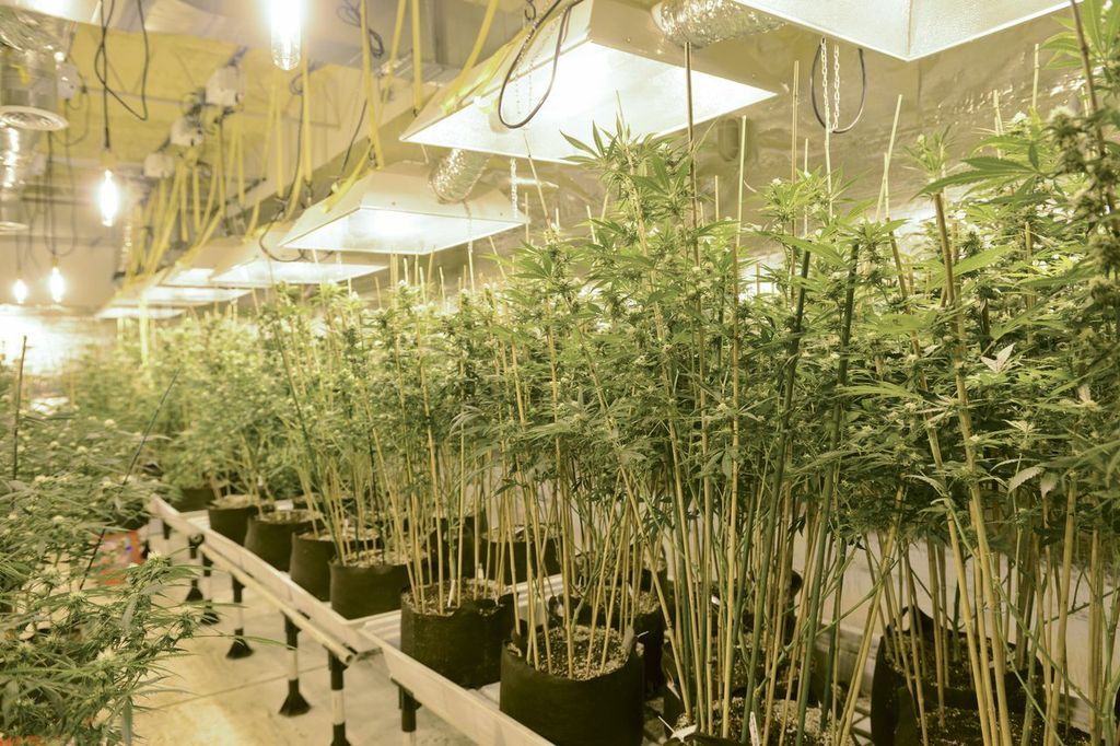 Grow Local Product of Colorado Consulting Cannabis